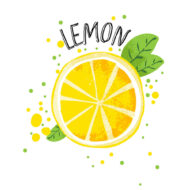 Vector hand draw lemon illustration. Half and splice of lemons with juice splashes isolated on white background. Yellow citrus sketch, juice citrus fruit with word Lemon on top. Fresh ripe lemon fruit